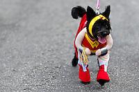A dog, wearing a fancy Superhero costume, participates in the Blocao pet carnival show at Copacabana beach in Rio de Janeiro, Brazil, 12 February 2012.
