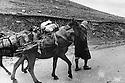Iraq 1974 <br /> The resumption of hostilities, arms'supply by mules for the peshmergas   <br /> Irak 1974 <br /> La reprise de la lutte arm&eacute;e, transport d'armes a dos de mulets pour les peshmergas