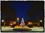A Christmas tree lit up in Prescott Park, Portsmouth, New Hampshire. iPhone photo, suitable for print reproduction up to 8&quot; x 10&quot;.