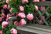 12 Garden Photos
