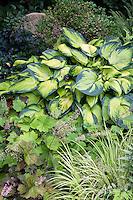 Hosta 'Bright Lights' in shade garden foliage tapestry with Alumroot, Heuchera vilosa 'Purpurea' and Golden Variegated Sweet Flag.Acorus gramineus 'Ogon'