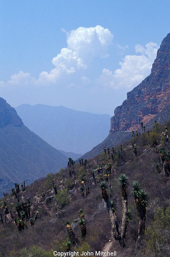 Mountainous landscape in the Sierra Gorda Biosphere Reserve, Queretaro state, Mexico