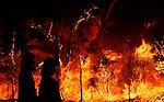 Australian bushfire season started early