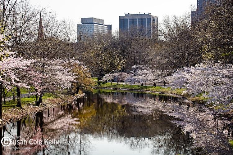 Springtime on the Storrow Lagoon, Boston, MA, USA