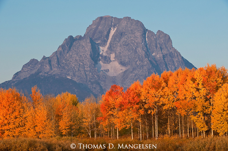 Fall color at Oxbow Bend in Grand Teton National Park, Wyoming.