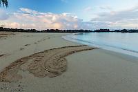 Honu (or green sea turtle) tracks left at Po'ipu Beach Park, southern Kaua'i.