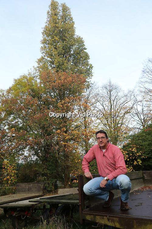 Foto: VidiPhoto<br /> <br /> 's-HEER ABTSKERKE - Kweker Peter van 't Westeinde van kwekerij Westhof in 's-Heer Abtskerke (Zeeland) bij zijn populus serotina de Selys, een populier die nog door zijn grootvader is geplant en ge&iuml;ntroduceerd in ons land.
