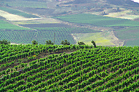 Marsala, Sicily, Italy, May 2006. Vineyards surround the city of Marsala. Marsala dessert wines are famous worldwide. photo by Frits Meyst/Adventure4ever.com