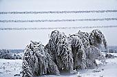 Niegowa 01.2010 Poland<br /> All trees bend under the weight of snow and ice.<br /> Three atmospheric forces: rain, snow and frost have changed into an ecological disaster the Myszkowski district in the Czestochowskie province, located 230 kilometers south of Warsaw. Almost 95% of all trees are down.Thousands of homes are left without electricity.<br /> Photo: Adam Lach / Napo Images for Newsweek Polska<br /> <br /> Wszystkie drzewa uginaja sie pod ciezarem sniegu i lodu.<br /> Wstepnie &quot;tylko&quot; 95% scietych drzew w dwoch powiatach. 0.5 miliona metrow szesciennych zniszczonych lasow..Tysiace gospodarstw bez pradu. Wszyscy maja swiadomosc, ze na kumulacje trzech niekorzystnych .zjawisk atmosferycznych rady nie ma..Trzy zjawiska kt&oacute;re zamienily jeden z obszarow Polski w istn? katastrofe ekologiczna: deszcz, snieg i szadz.<br /> Fot: Adam Lach / Napo Images dla Newsweek Polska