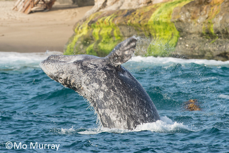 Socal Whale Watching