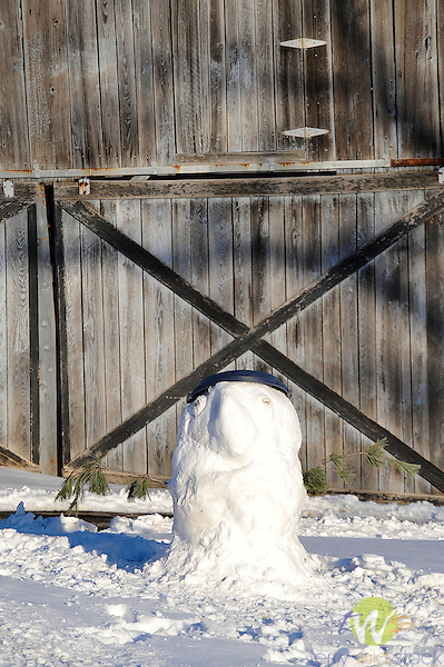 Snowman by barn resembling a parrot with garbage can hat.