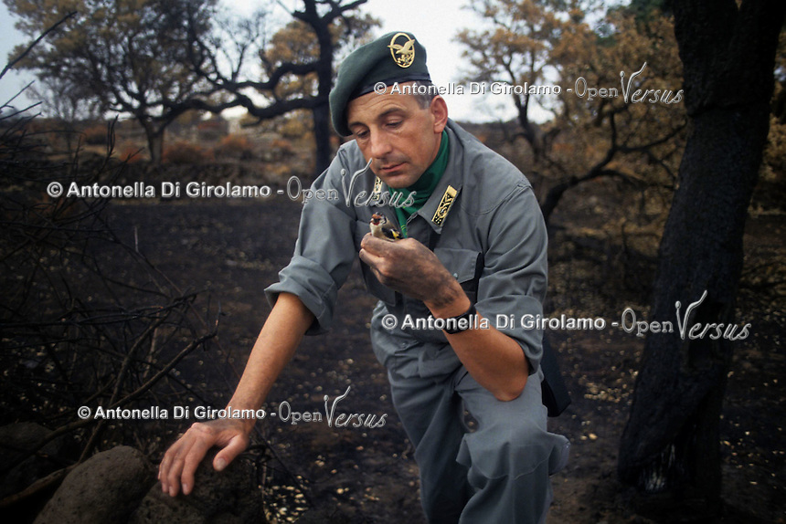 Forestali verificano i danni dopo un incendio..Forestry verify the damage after a fire....