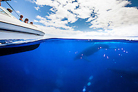 A family observes as whales swim close to their boat off the coast of Maui.