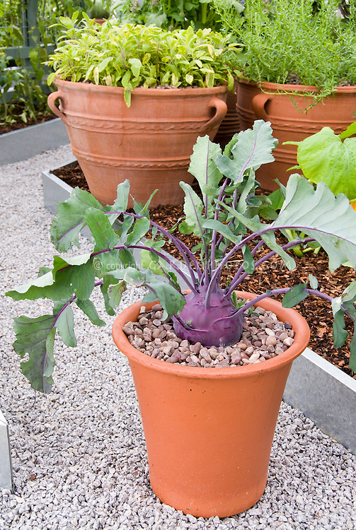 Container Gardening Vegetables The Gardening