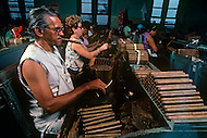 Cuba, March 1992: The Torcedores i.e. cigar rollers, rolling cigars in La Corona, The largest Cigar factory in Havana. A Torcedor in his life learns how to roll one to a maximum of  three different sizes of cigars. The fastest Torcedor can roll upto 110 cigars per day.