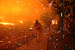 Nov 15, 2008 - Los Angeles, California, USA - A firefighter walks through flying embers as flames from the Sayre Fire burns in the Granada Hills section of Los Angeles. The fire originated in Sylmar and jumped two freeways as it burned west into Granada Hills..