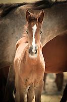 Baby Face - Wild Horse - Utah