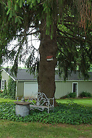 Metal wire garden bench in shade with violets under tall evergreen tree near house for shady spot to sit outside in backyard, with birdhouse, rustic table