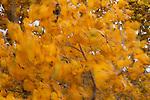 Trees inside Kodachrome National Park in southwestern Utah in the late fall.