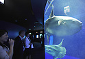 August 1, 2011, Tokyo, Japan - The Shunshine Lagoon, a huge water tank that holds some 240 tons of water, is the major attraction at Shunshine City Aquarium in Tokyos Ikebukuro district on Monday, August 1, 2011. The main attraction at the 66-story landmark opens for general public on August 4 upon the completion of the 11-month renewal work. (Photo by Natsuki Sakai/AFLO) [3615] -mis-