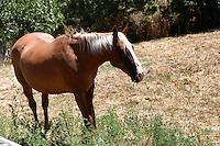 Cavalli.Horses. ...