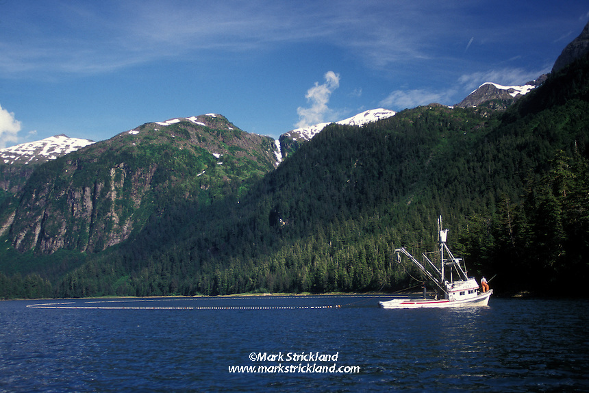 A purse seiner closes its net on schooling Salmon in Prince William Sound, Alaska