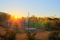 The sun rises over an community garden in Washington, DC.