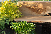 Garden Bench made of sustainable wood, mounding plant Heuchera Lime Rickey, with Hosta at base