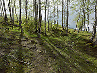 FOREST_LOCATION_90027