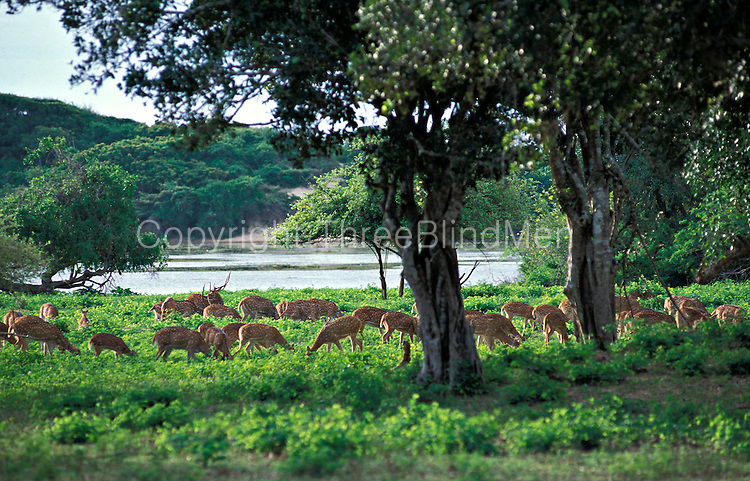 Yala National Park.