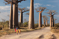 A group of young girls walk thorugh Avenue of the Baobabs, near Morondava, Madagascar