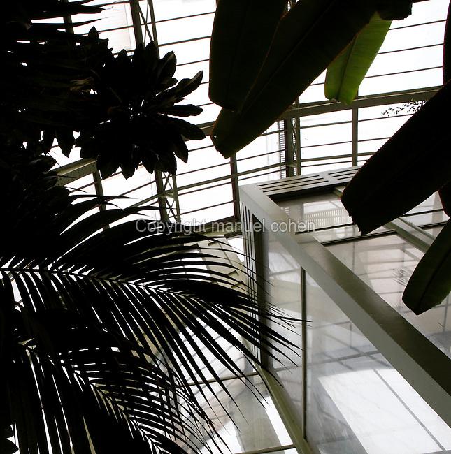 Tropical Rainforest Glasshouse (formerly Le Jardin d'Hiver or Winter Gardens), 1936, René Berger, Jardin des Plantes, Museum National d'Histoire Naturelle, Paris, France. View from below showing foliage around the main Art Deco style entrance.