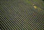 Aerial view of new vineyard planting in Napa Valley, California