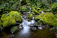 A stream with mini-waterfalls near Hamama Falls, Kane'ohe, Windward O'ahu.