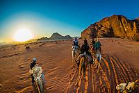 Tourists riding camels at sunrise, Arabian Desert, Wadi Rum, Jordan.