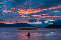 Brown bear wades in the Brooks river, morning sunrise over the Brooks river and Naknek lake, Katmai National Park, Alaska.