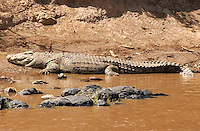 A huge crocodrile rests on the shores of the Mara River, in the Kenya-Tanzania border. (PHOTO: MIGUEL JUAREZ LUGO).