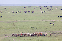 Masai shepherds tending to their flock on open plains dotted with grazing blue wildebeest in the Mara, Kenya, Africa (photo by Wildlife Photographer Matt Considine)