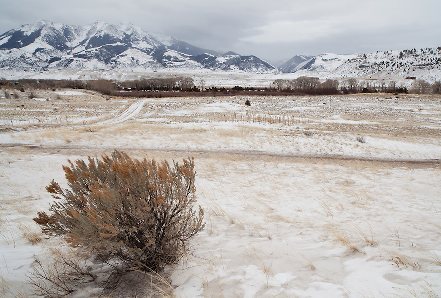 Clouds surround the mountainside in the background overlooking a snowy field in the winter of Yellowstone National Park.
