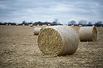 Corn stalks bundled into round bails in Dane County, Wisconsin.