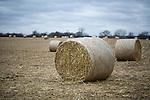 Corn stalks bundled into round bails in Dane County, Wisconsin.
