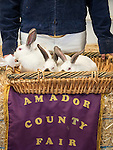 50th Amador County Junior Livestock Auction