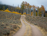 Idaho, South Central, Stanley.A winding dirt road and aspen trees at the base of the White Cloud Mountains in autumn.