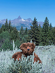 Berry Bear sits in front of mountains on the Beartooth Highway.