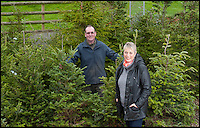 BNPS.co.uk (01202) 558833<br /> Picture: LauraJones/BNPS<br /> <br /> Peter Inch and his wife Jo Hunt from Charminster, Dorset among some of the Christmas Trees they rent out.<br /> <br /> En-tree-preneur Peter Inch has found an innovative way to stop Christmas trees being discarded after the festive season - by renting and replanting them.<br /> <br /> The businessman has grown around 3,000 pine trees on his farm that he charges people to use in their homes during the holiday period.<br /> <br /> Peter delivers the trees to customers' doors at the end of November and then collects them in the first week of January.<br /> <br /> Once he has picked up the trees they are placed back in the ground in tubs and linked up to a watering system that revives them after being inside for so long.