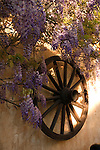 Wisteria and wagon wheel early morning on rustic wall, Tenerife, Canary Islands, Spain