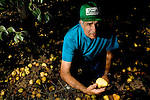 Pear grower Nick Ivicevich poses next to pears rotting on the ground of his orchard in Lakeport, CA on September 12, 2006. Stepped-up border enforcement has led to a shortage of migrant labor which has left much of the pear crop rotting on the tree and ground in Lake County.