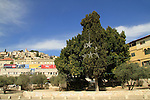 Israel, Lower Galilee, Mary's Well square in Nazareth