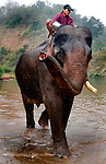 A mahout gives his Asian elephant (elephas maximus)a final rinse after the elephants bath at Pak Lai, Laos.