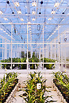 September 9, 2014. Research Triangle Park, North Carolina.<br />  Corn in different grow rooms within the large greenhouse are given different nutrients and amounts of light to monitor the effects of each environment. Omni sensors that monitor temperature, humidity, and light and carbon dioxide levels hang from the ceilings in each room.<br /> The Independe is nearly one acre of advanced agricultural research under glass. The lab is capable of maintaining many different environments under its roof, allowing scientists to test the effects of various environmental elements on different crops and plants side by side.